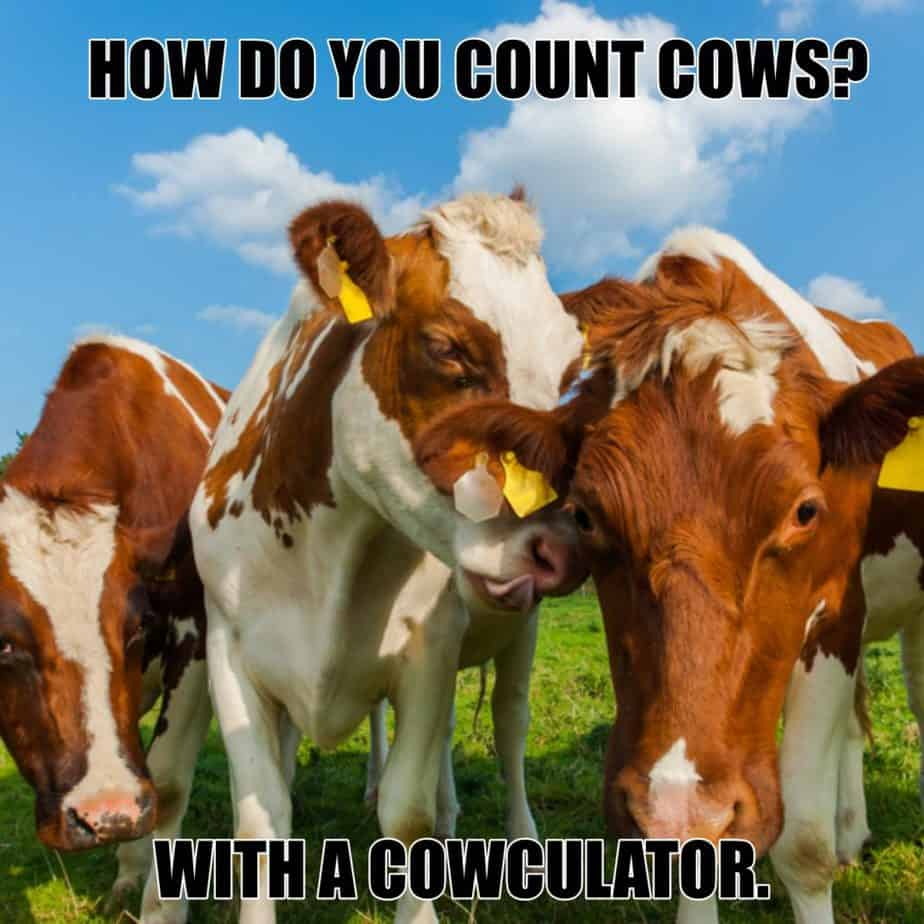 How do you count cows With a cowculator