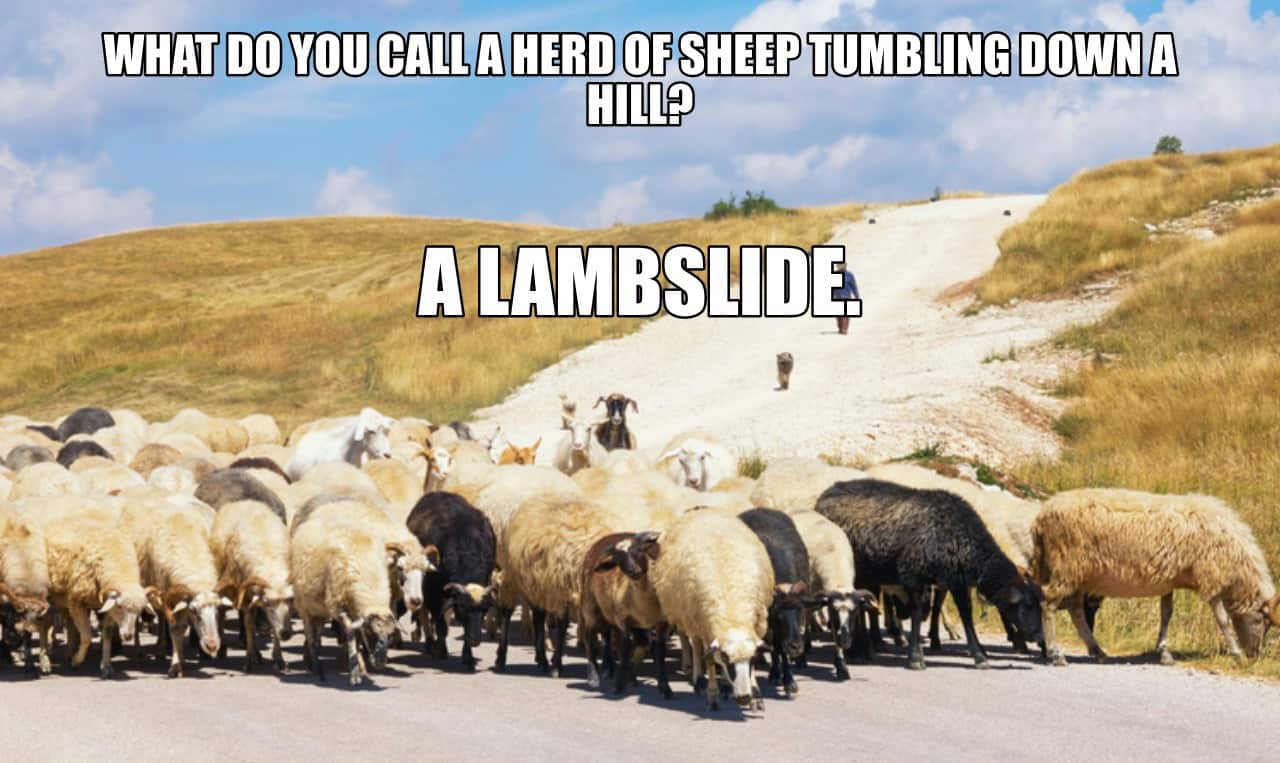 WHAT DO YOU CALL A HERD OF SHEEP TUMBLING DOWN A HILL A LAMBSLIDE