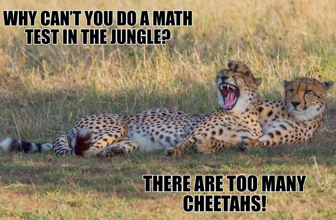 WHY CANT YOU DO A MATH TEST IN THE JUNGLE THERE ARE TOO MANY CHEETAHS