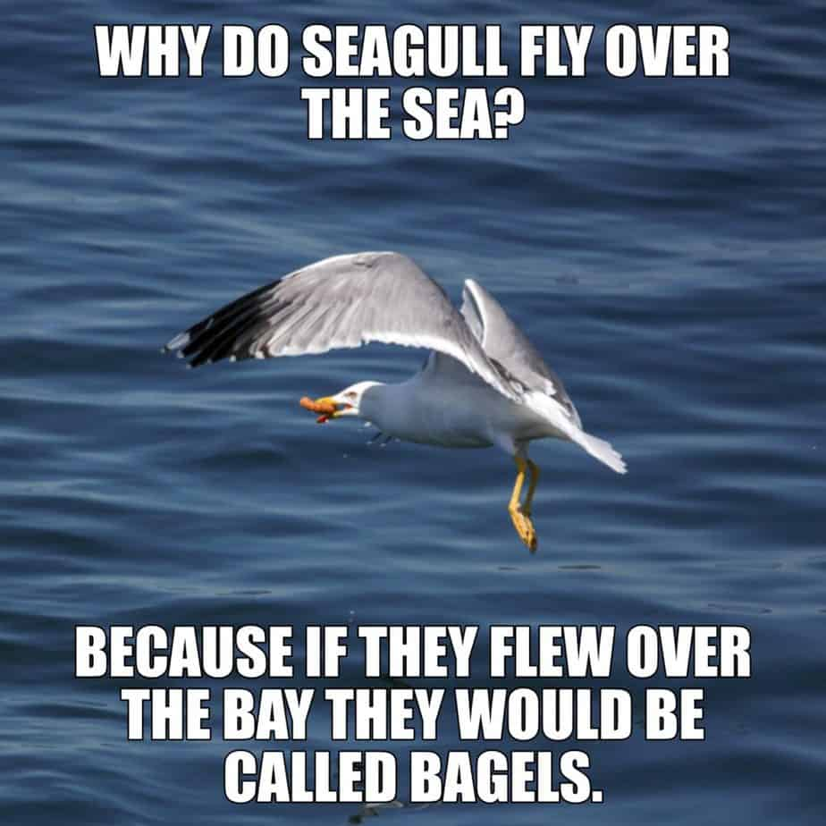 WHY DO SEAGULL FLY OVER THE SEA BECAUSE IF THEY FLEW OVER THE BAY THEY WOULD BE CALLED BAGELS
