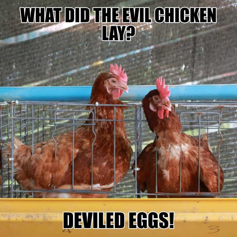 What did the evil chicken lay Deviled Eggs