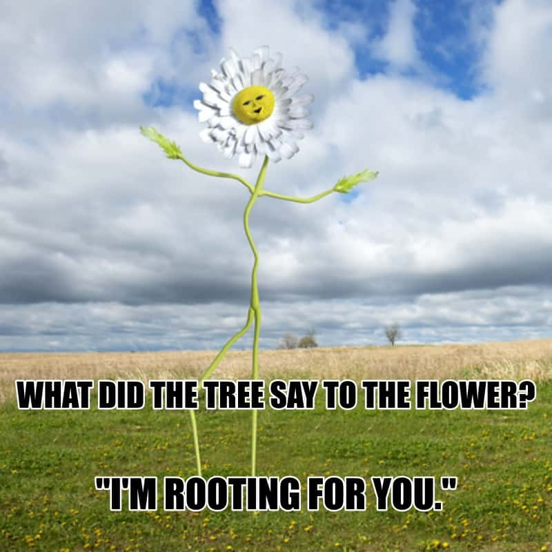 What did the tree say to the flower Im rooting for you