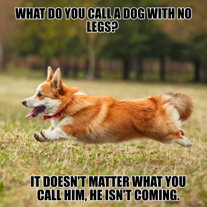 What do you call a dog with no legs It doesnt matter what you call him he isnt coming