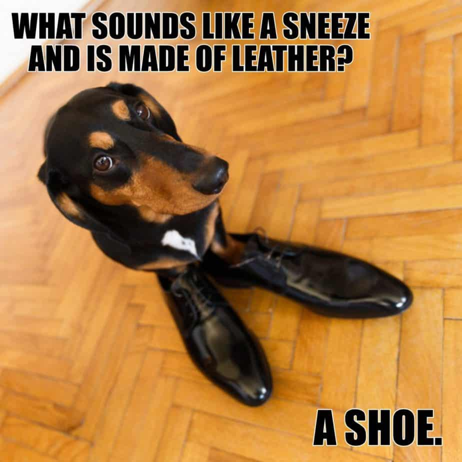 What sounds like a sneeze and is made of leather A shoe