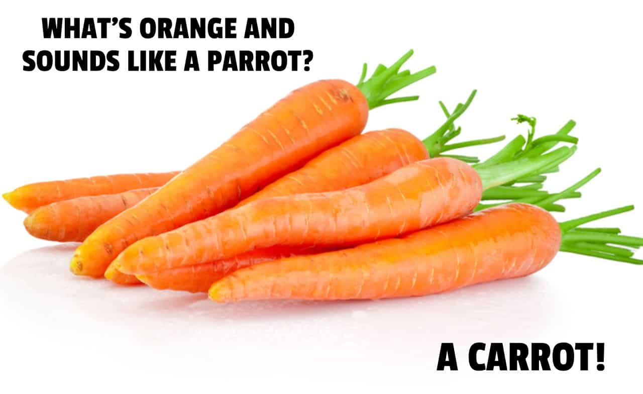 Whats orange and sounds like a parrot A Carrot