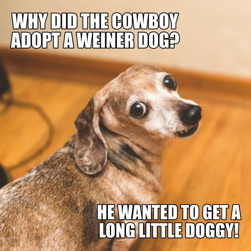 Why did the cowboy adopt a weiner dog He wanted to get a long little doggy