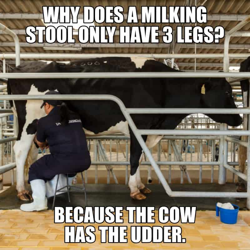 Why does a milking stool only have 3 legs Because the cow has the udder