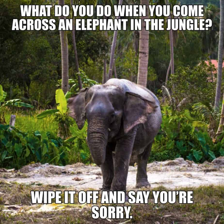 What do you do when you come across an elephant in the jungle Wipe it off and say you're sorry