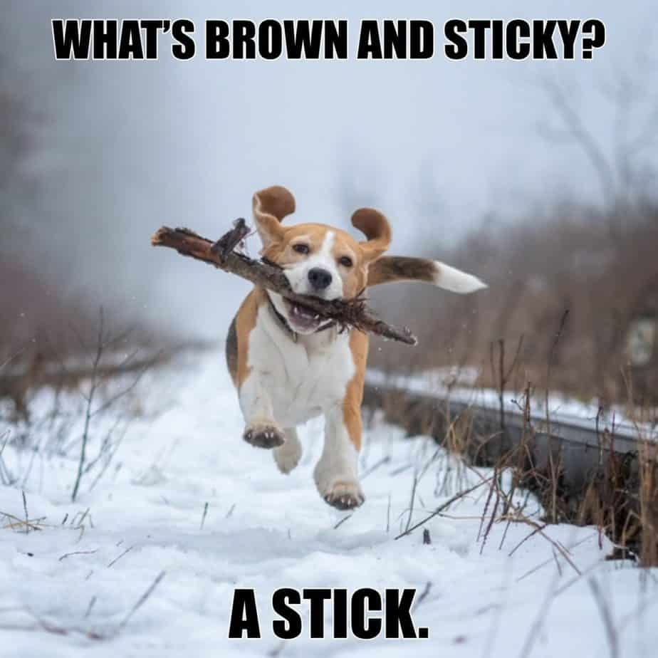 Whats brown and sticky A stick