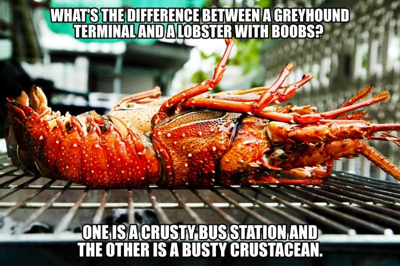 Whats the difference between a Greyhound terminal and a lobster with boobs One is a crusty bus station and the other is a busty crustacean