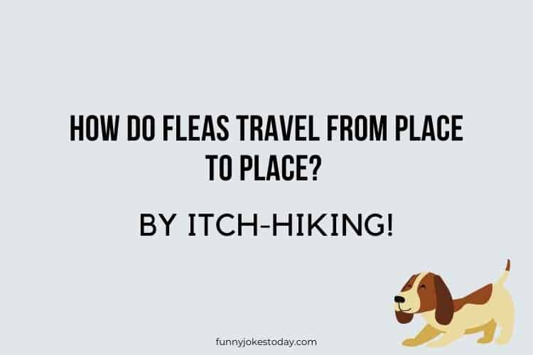 Dog Jokes - How do fleas travel from place to place?