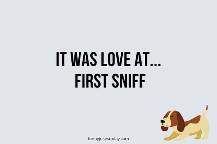 Dog Jokes - It was love at first sniff.