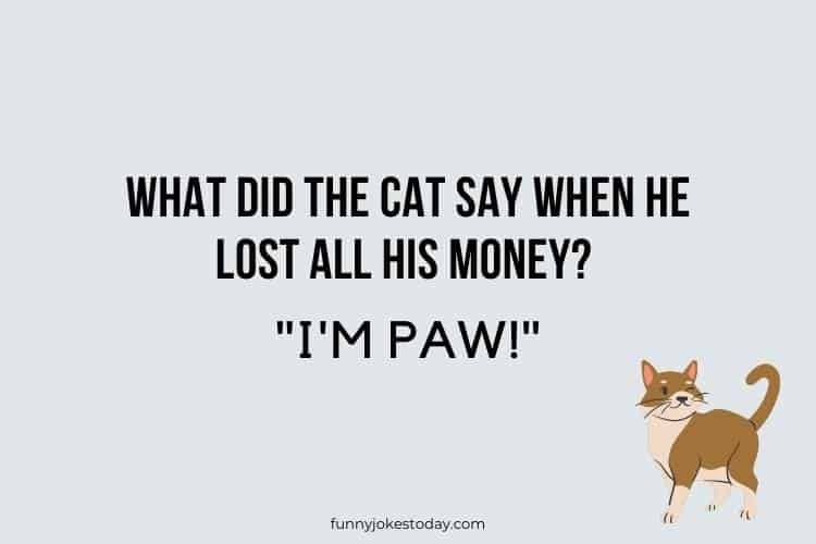 Cat Jokes - What did the cat say when he lost all his money?