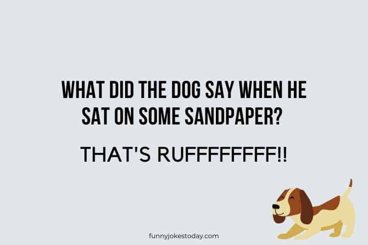 Dog Jokes - What did the dog say when he sat on some sandpaper?