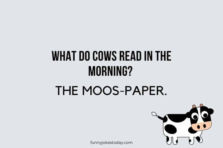 Cow Jokes - What do cows read in the morning?