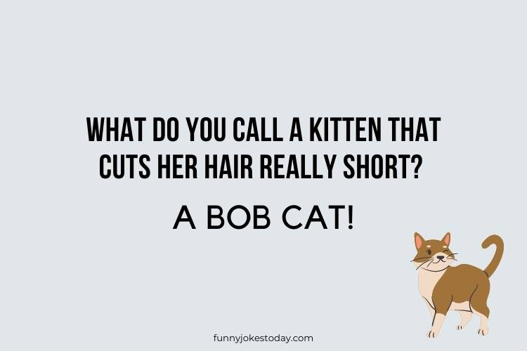 Cat Jokes - What do you call a kitten that cuts her hair really short?