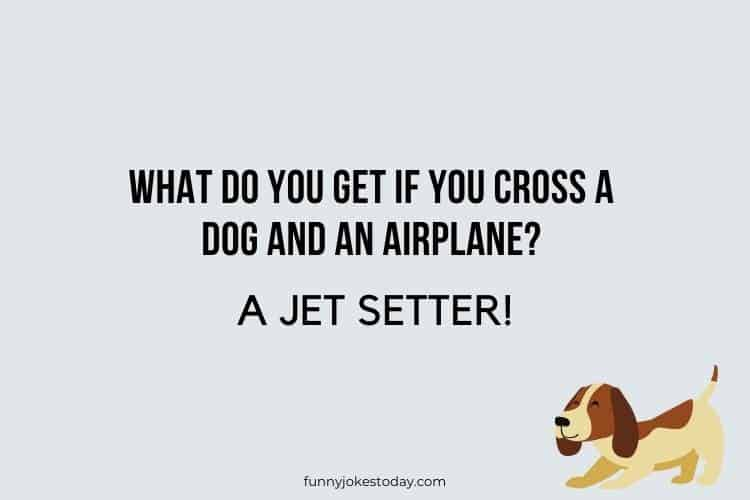 Dog Jokes - What do you get if you cross a dog and an airplane?