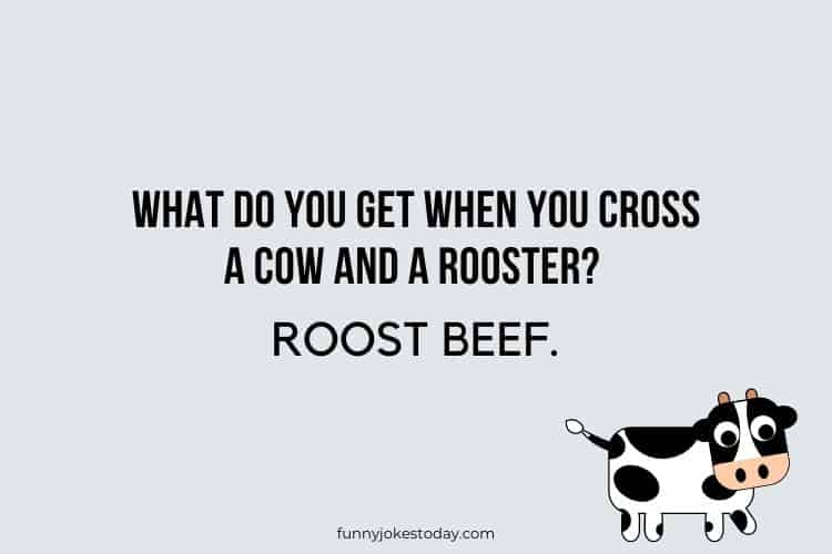 Cow Jokes - What do you get when you cross a cow and a rooster?