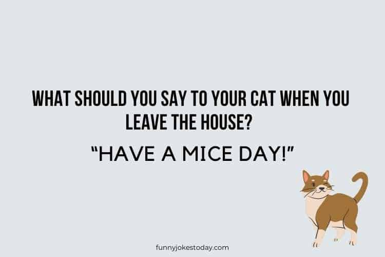 Cat Jokes - What should you say to your cat when you leave the house?