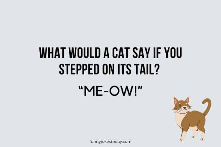 Cat Jokes - What would a cat say if you stepped on its tail?