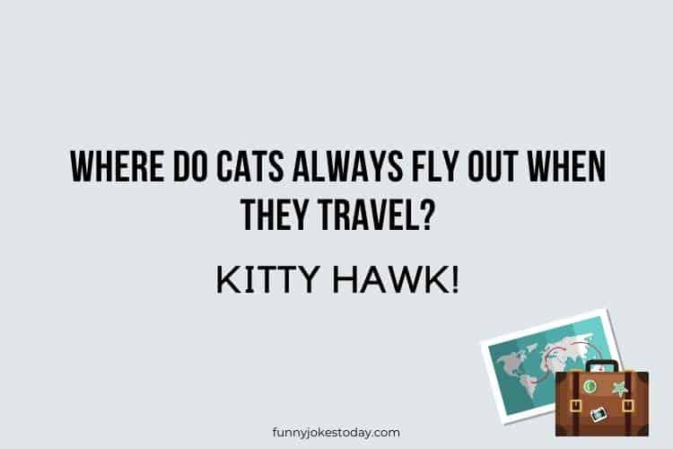 Travel Jokes - Where do cats always fly out when they travel?
