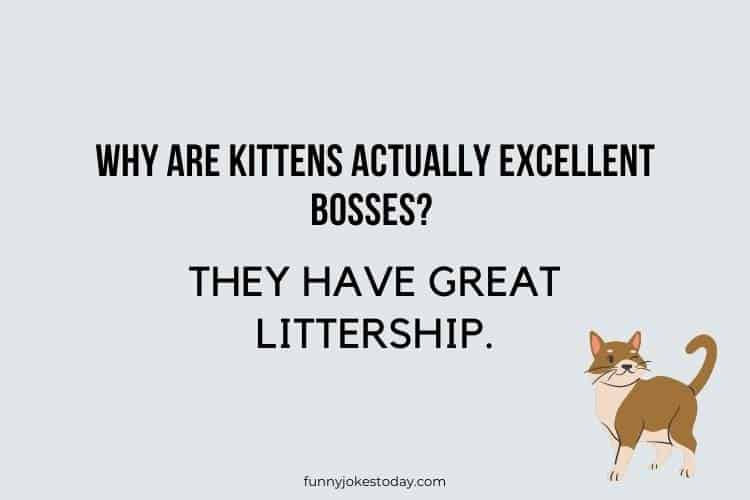 Cat Jokes - Why are kittens actually excellent bosses?