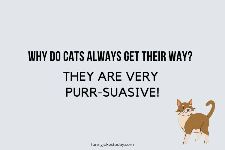 Cat Jokes - Why do cats always get their way?