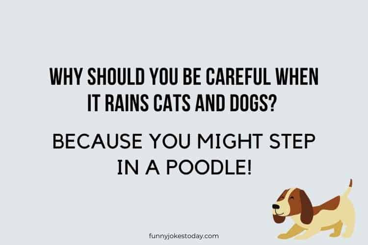 Dog Jokes - Why should you be careful when it rains cats and dogs?